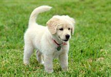 güzel köpek resmi
