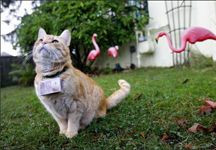 Kedi resmi