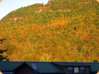 Leaf changes at River Vista