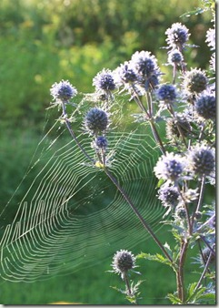 spindelnät i martorn