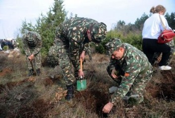 macedonian tree planting