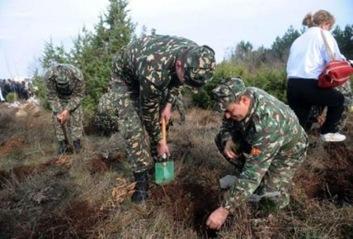 macedonian tree planting