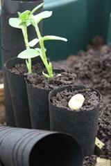 GPR-034 Grow Tubes1-1