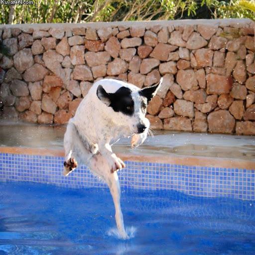 2010_10_02_20_25_pics_kuvaton_com_kuvei_dog42.jpg