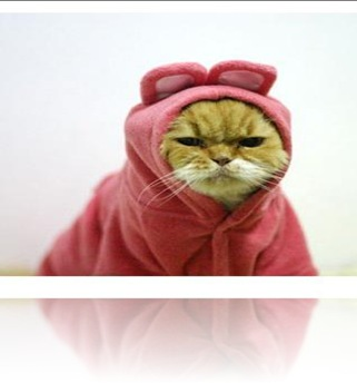 angry-cat-in-pink-rabbit-costume-1