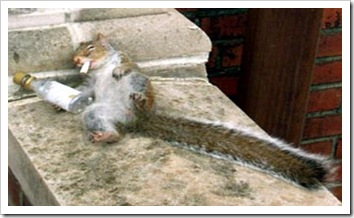 drunk_20squirrel_5b1_5d