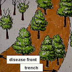 where-to-trench.jpg