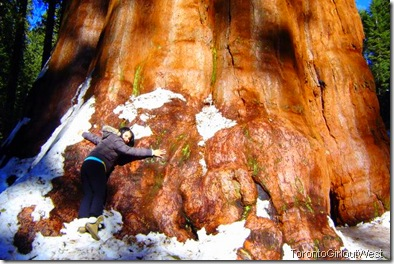 Karen and giant sequoia