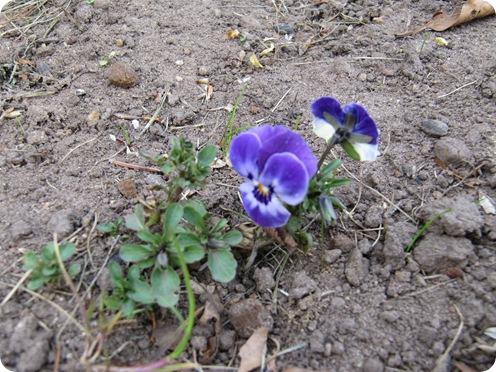 Blomster, forår elle hva' 016