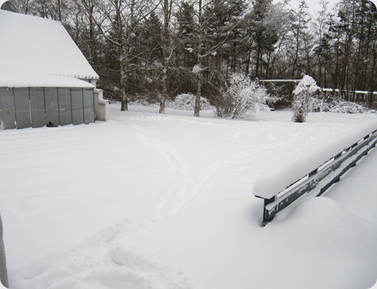 Vinter jan 2010 005