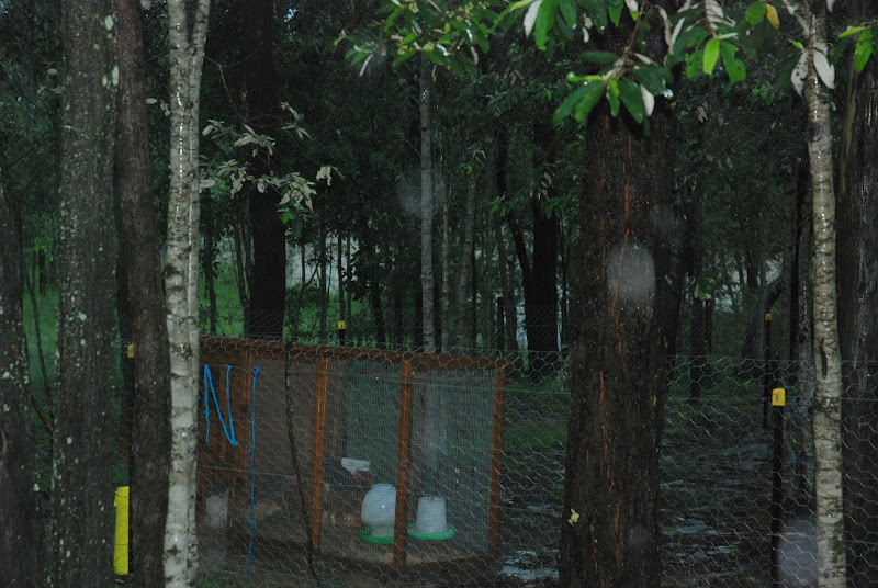 Flood waters approaching our chickens !