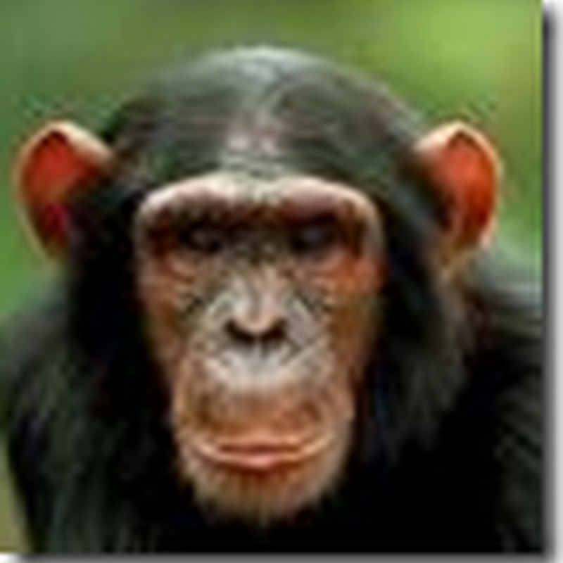 Chimp attack victim flown to Cleveland Clinic to see a reconstructive surgery specialist