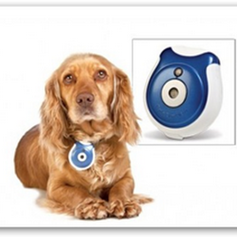 Spy on Your Dog – Home Monitoring Devices for those Guys Too