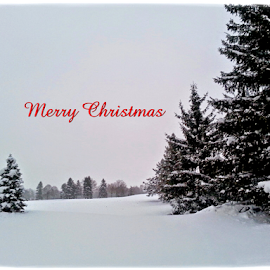 Merry Christmas by Dipali S - Typography Captioned Photos ( optical, optics, illustration, motivation, type, decor, inspiration, calligraphy, card, place, template, element, text, creative, letter, font, art, label, calligraphic, sign, frame, poster, word, typography, letters, headline, graphic, ornate, decorative, captioned, title, words, quote, inscription, classic, note, banner, typographic, abstract, icon, decoration, vintage, christmas, advertisement, photo, message, motivational, typo, background, artistic, design )