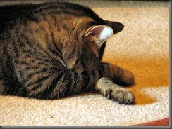 gatoescondecabeça