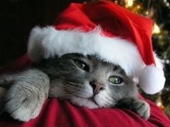 gato_natal