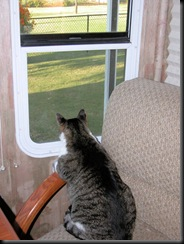 bird watching2