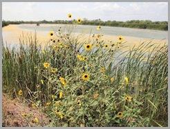 Estero Llano Grande State Park15