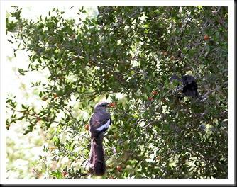 mockingbird and baby