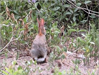 bunny07212
