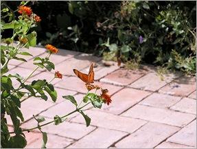 butterfly072303