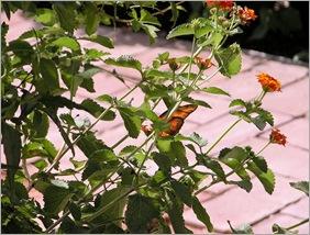 butterfly072304