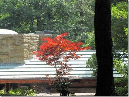 Tree Kentuck Knob