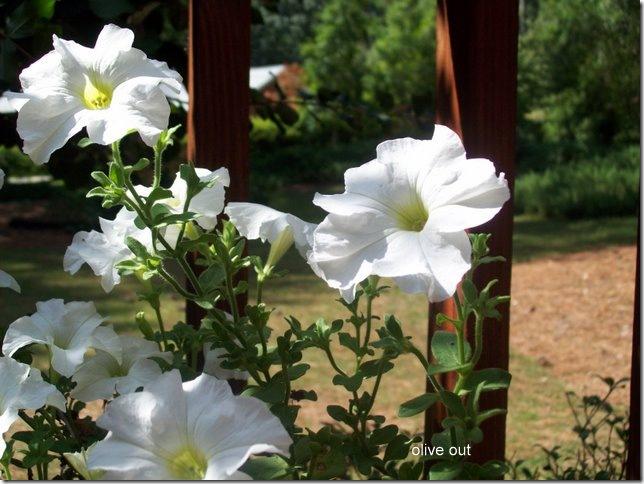 barn flowers 008