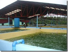 A portion of the hatchery showing the algal tanks