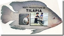 Seed Production of Tilapia