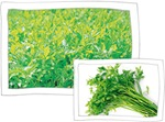 Chilgok Natural Water Celery