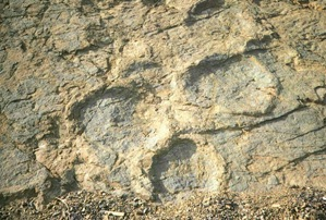 Uiseong Fossilized dinosaurs footprint of Jeo ri 06