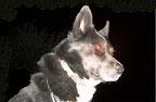Nos loups grandissent, postez nous vos photos - Page 5 SPACECHIP%20two