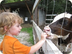rals feeds the cows crackers (2)