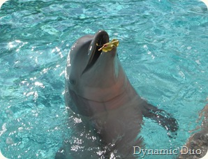 dolphin playing with a leaf, too cute!!! (3)