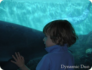 rals nose to nose with dolphin