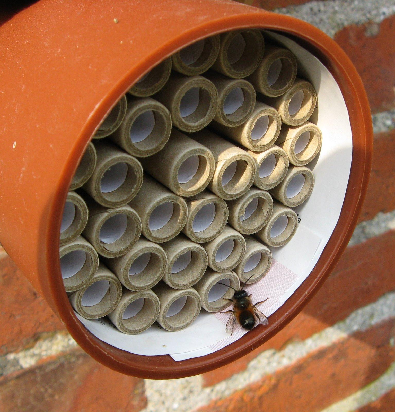 vilde bier i haven
