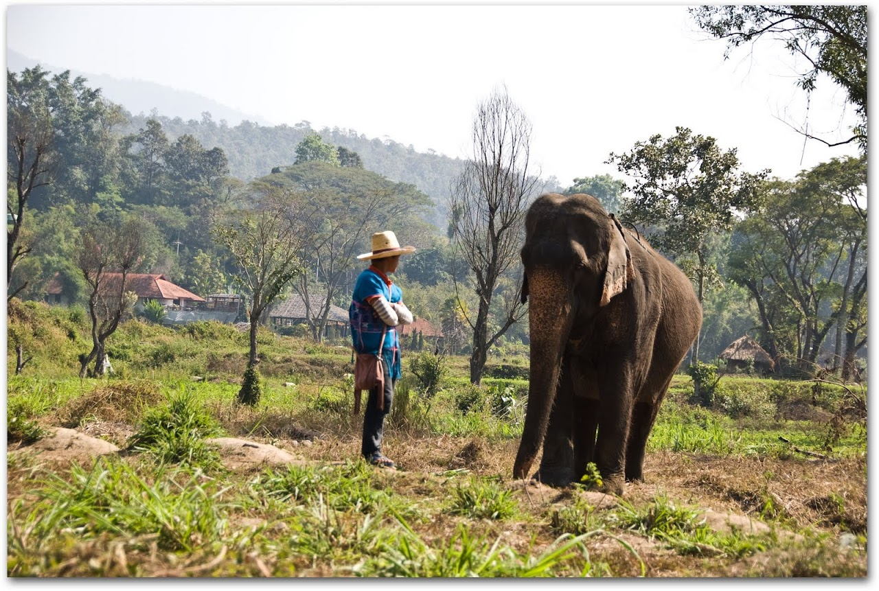 Elephant and trainer at Patara Elephant Farm, Chiang Mai