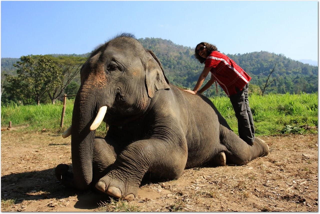 Akila dusting elephant