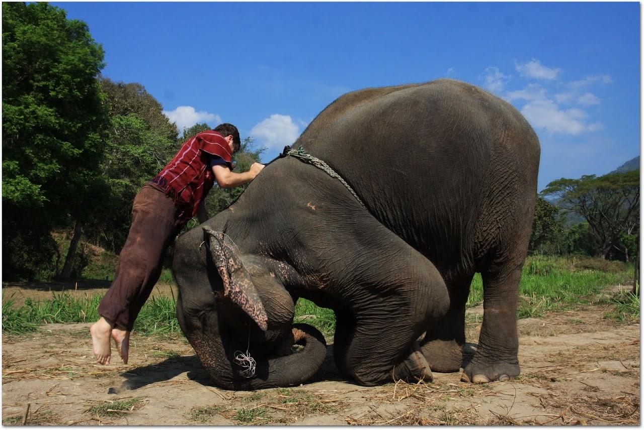 Jumping onto an elephant