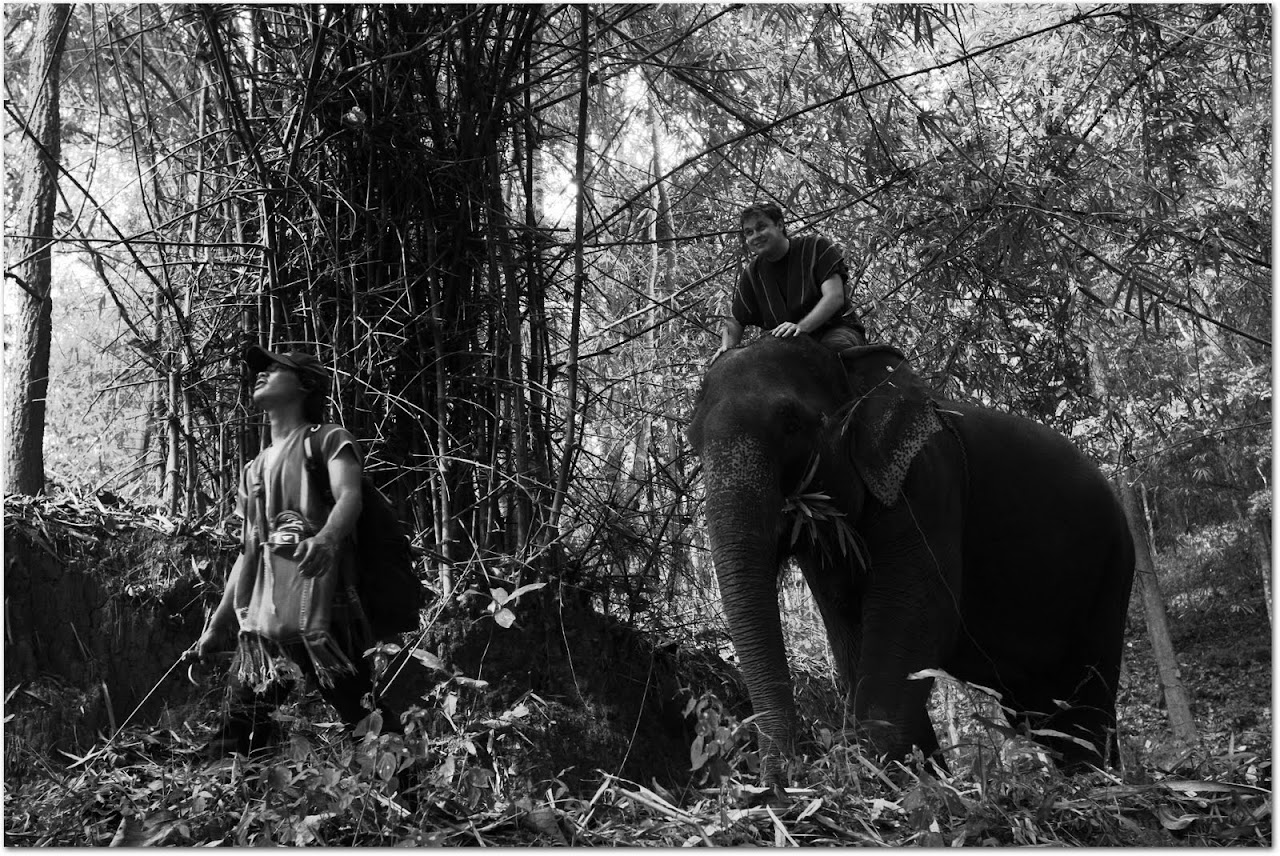 Riding an elephant with mahout through forest