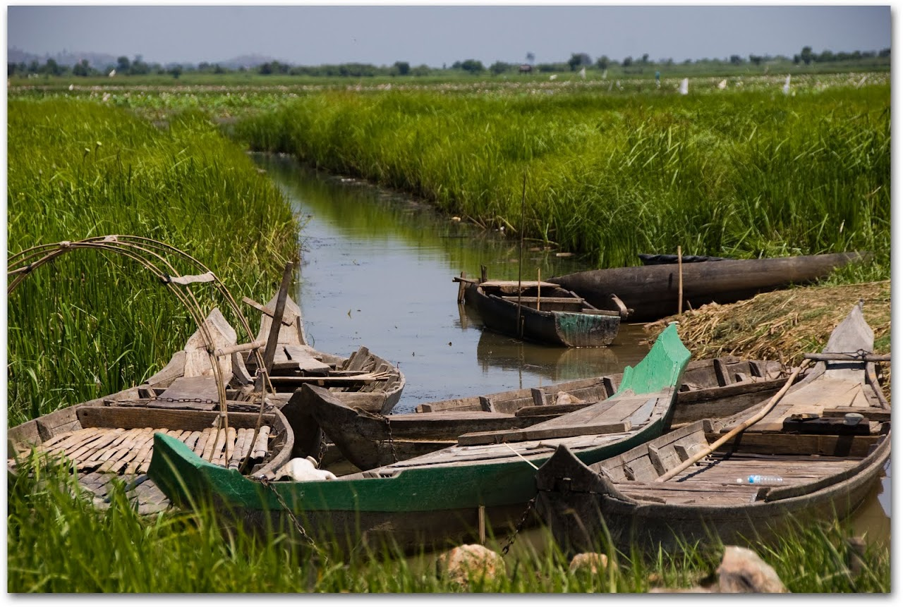 Boats in rice fields