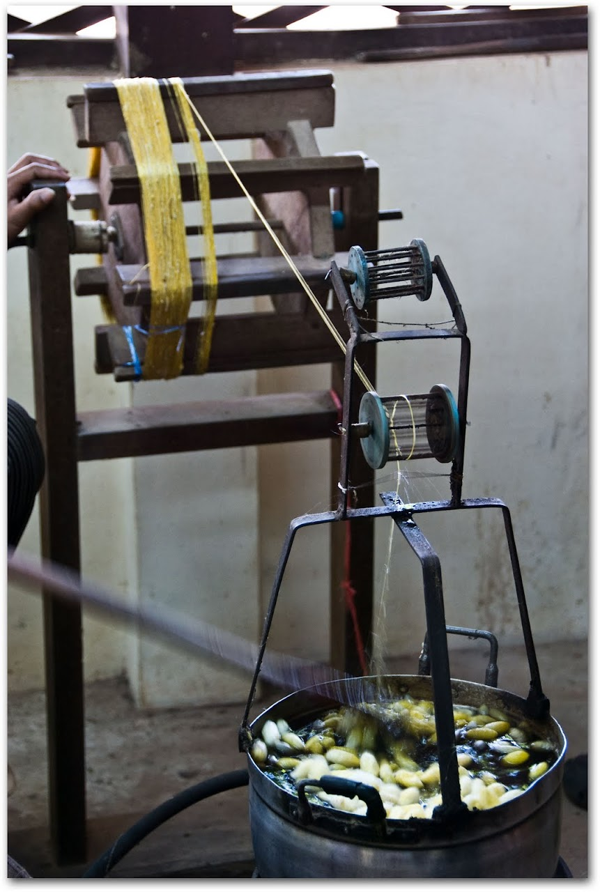 Silk thread extraction
