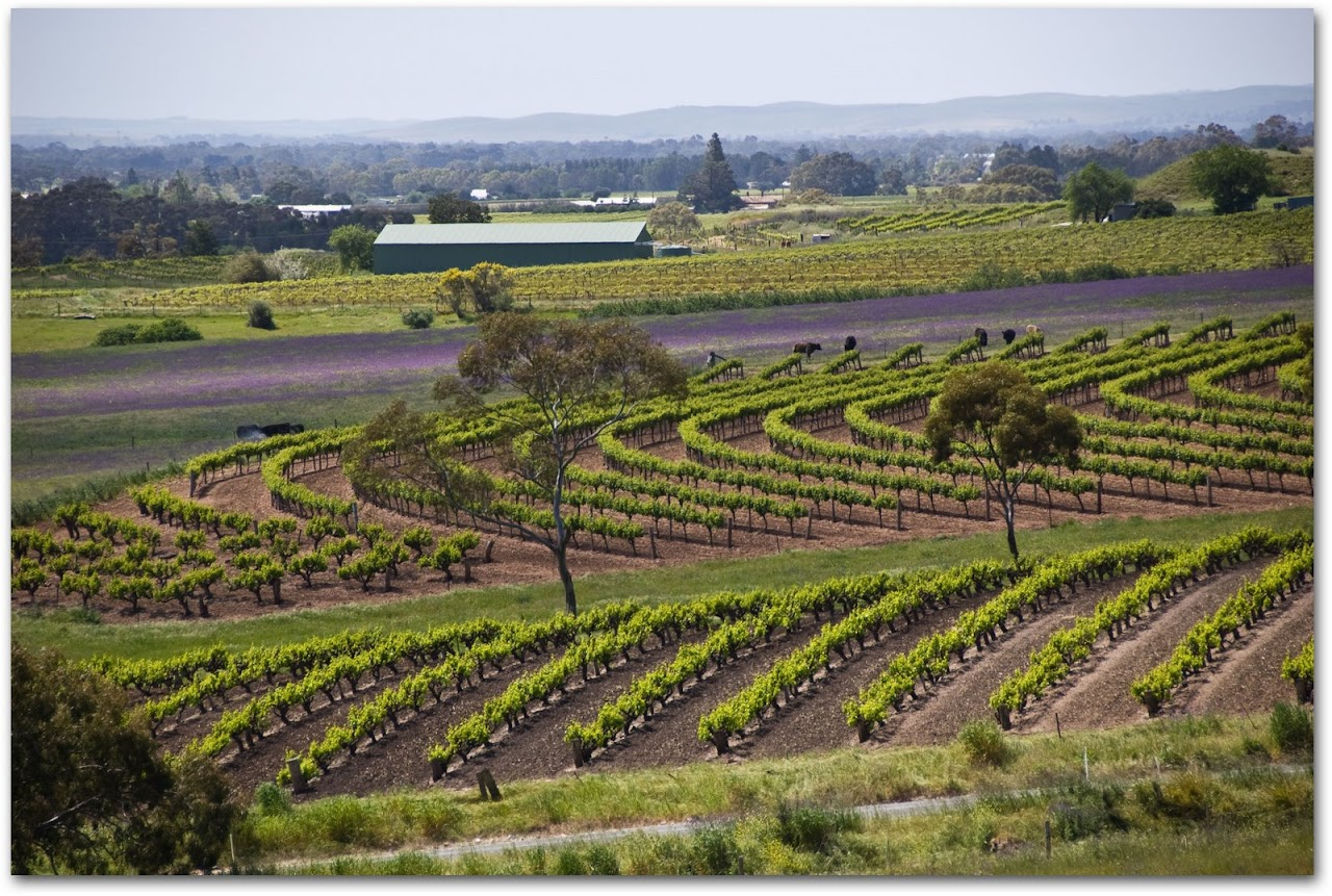Barossa Valley overview