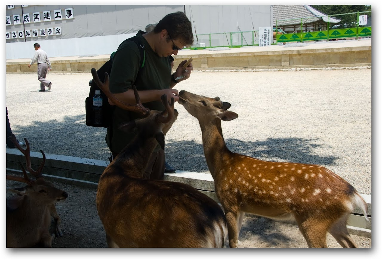 Patrick feeding deer at Nara