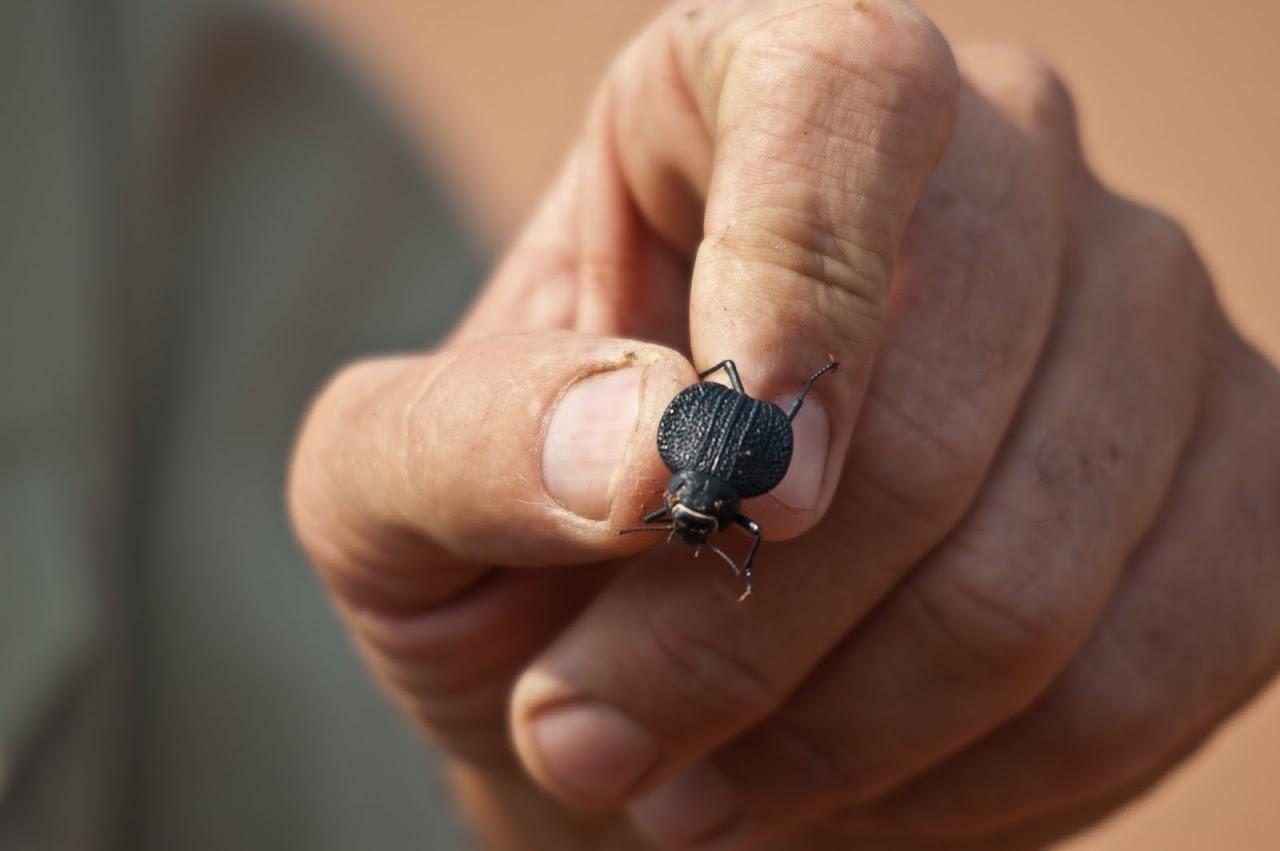 Bushman holding beetle