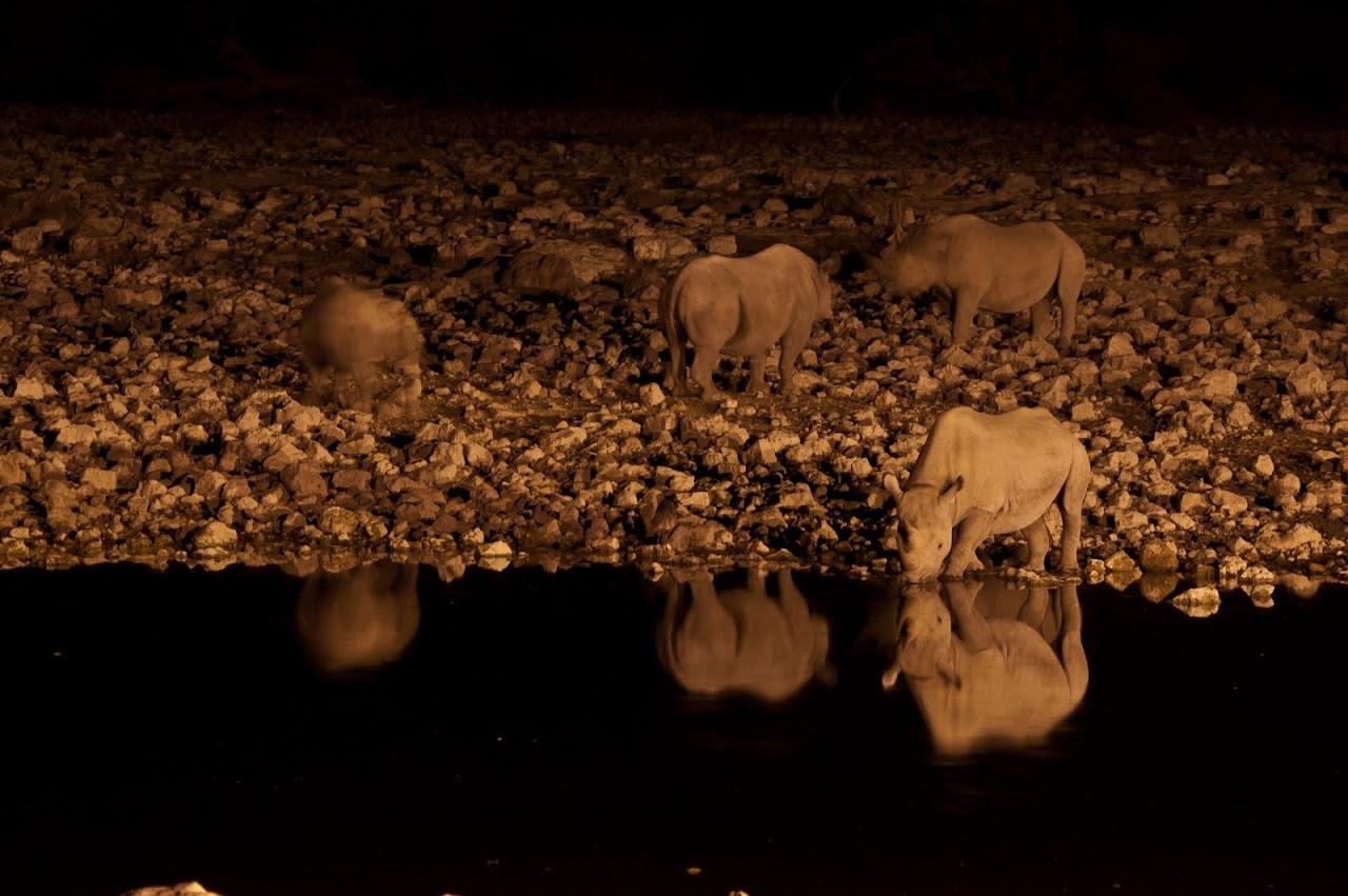 Rhinos at watering hole Etosha