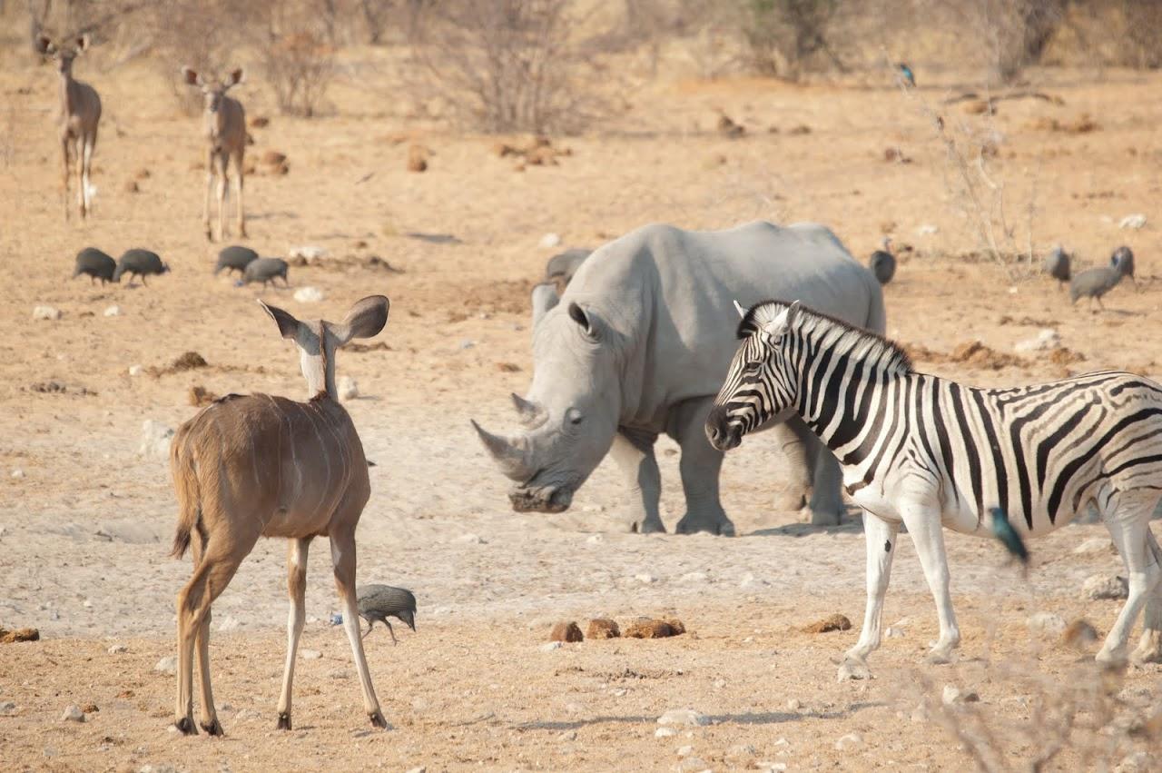 Rhino, zebra, nyala Etosha