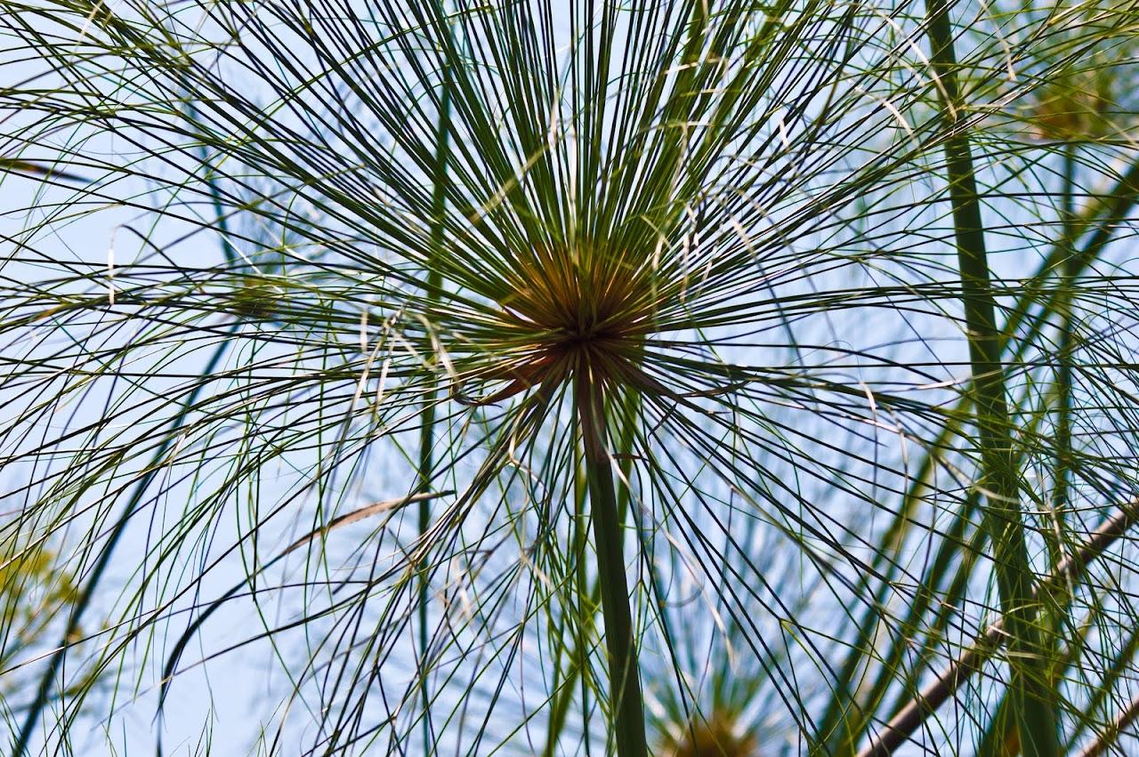 Ferns Okavango Delta