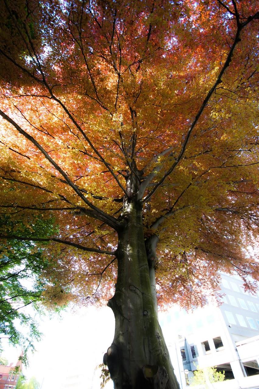 Tree in Christchurch